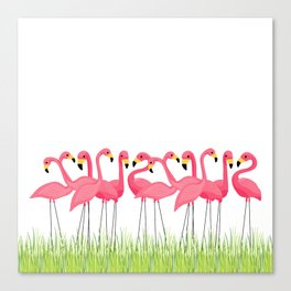 Cuban Pink Flamingos Canvas Print