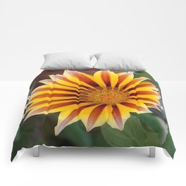Single Flower Close Up Gazania Red Stripe Comforters