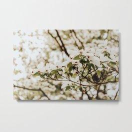 White Flower Branch Metal Print