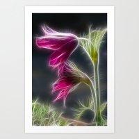 Pulsatilla Pink Art Print