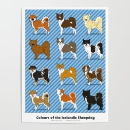 Colors of the Icelandic Sheepdog Poster
