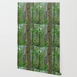 Tree Climber Wallpaper