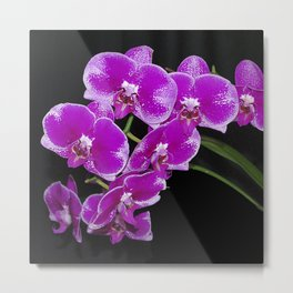 Graceful spray of deep pink orchids Metal Print