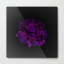 Ultra Violet Velvet Rose loves Black Metal Print