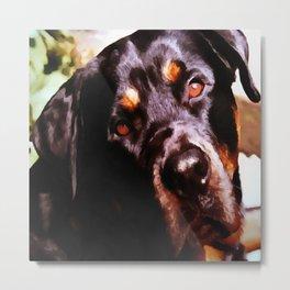 Rottweiler Dog Artistic Pet Portait Metal Print