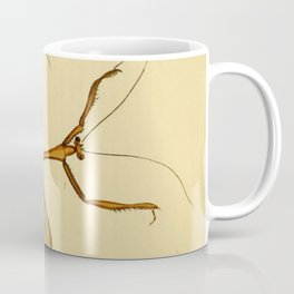 Naturalist Stick Bugs Coffee Mug