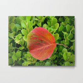 First leave of Fall Metal Print