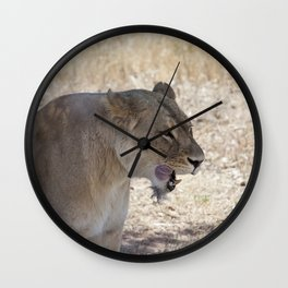 Lion after Lunch Wall Clock