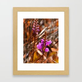 Fall Colors Hilton Head Garden Framed Art Print