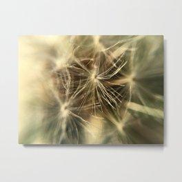 Common Dandelion in Fort Mason Metal Print