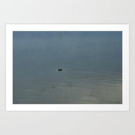 Morning Blue: Mallard Art Print