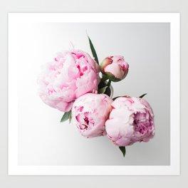 Pink Peonies 01 Art Print
