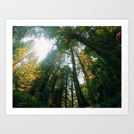 If Trees Could Talk Art Print