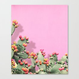 Prickly Pear plants on Pink Canvas Print