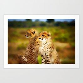 Pair of Cheetahs Art Print