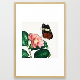 Camellia japonica (Camélia du Japon) illustrated by Charles Dessalines D' Orbigny (1806-1876) Framed Art Print