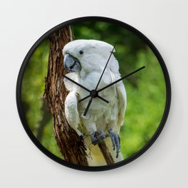 White Cockatoo Wall Clock