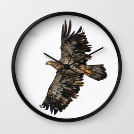 Immature Bald Eagle Wall Clock
