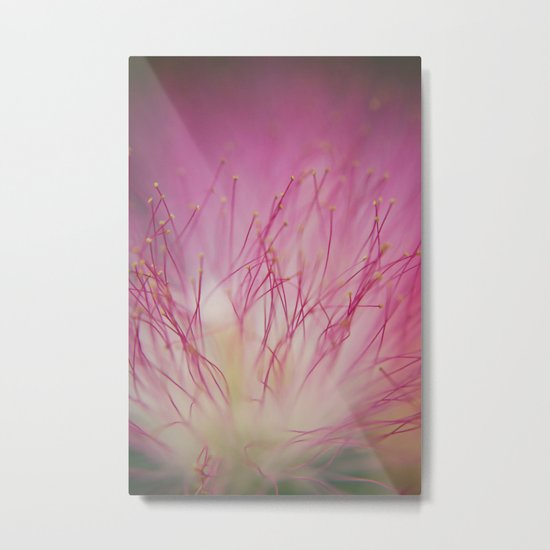 Mimosa Bloom Metal Print