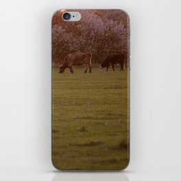Cows iPhone Skin