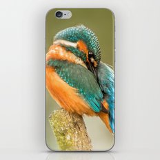 Kingfisher iPhone Skin