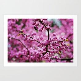 SC Clemson Botanical Gardens Art Print