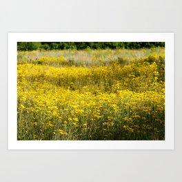 Field of Gold No.1 Art Print