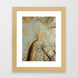 Dancing Birch Framed Art Print