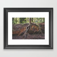 Jedediah Smith State Park - Forest Tree Framed Art Print