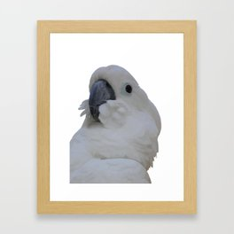Ruffled Feathers Of A Blue Eyed Cockatoo Isolated Framed Art Print