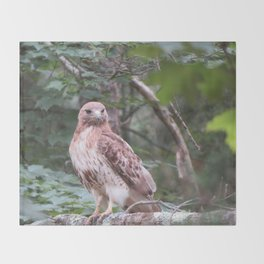 Hawk looking front Throw Blanket