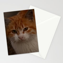 The Cat Stationery Cards