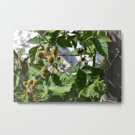 """Cottage Garden"" Nature Photography Metal Print"