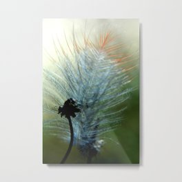 Caught In Brier   Metal Print