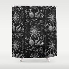 Ernst Haeckel - Phaeodaria Shower Curtain