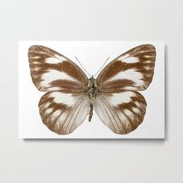 "Butterfly species Appias libythea ""Striped Albatross"" Metal Print"