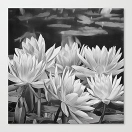 Water Lily in Black and White Canvas Print