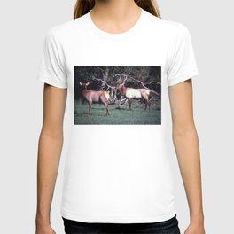 Roosevelt Elk T-shirt