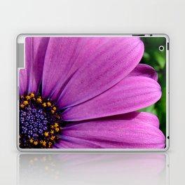 Purple Osteospermum Laptop & iPad Skin