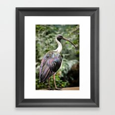 Bird of Colors Framed Art Print