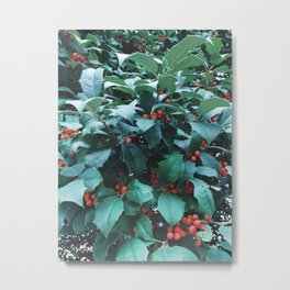 Sprigs of Holly Metal Print