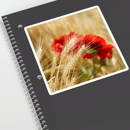 Field of golden wheat with red poppy flowers Sticker