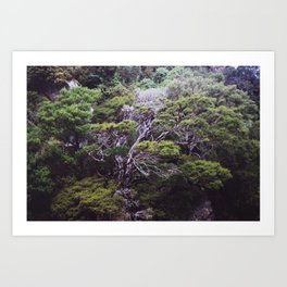The forest by the ocean (Golden Bay, New Zealand) Art Print
