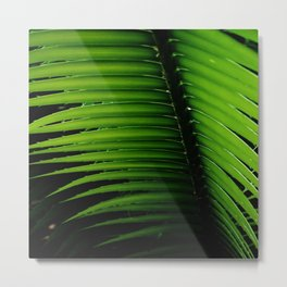 Palm tree leaf - tropical decor Metal Print