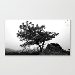 Torrey Pine Canvas Print