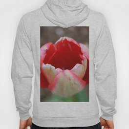 Pales By Comparison Hoody