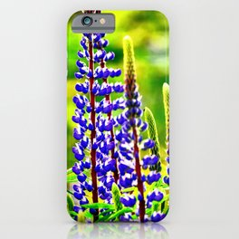 VIBRANT PURPLE LUPINES GLOWING IN SPRING iPhone Case