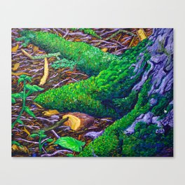 Tree Roots with Moss Canvas Print
