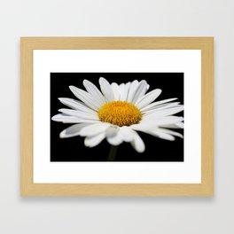 Daisy on Black Framed Art Print