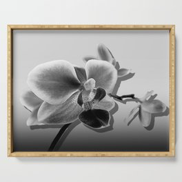 Orchid in Black and White Contemporary Art A537 Serving Tray